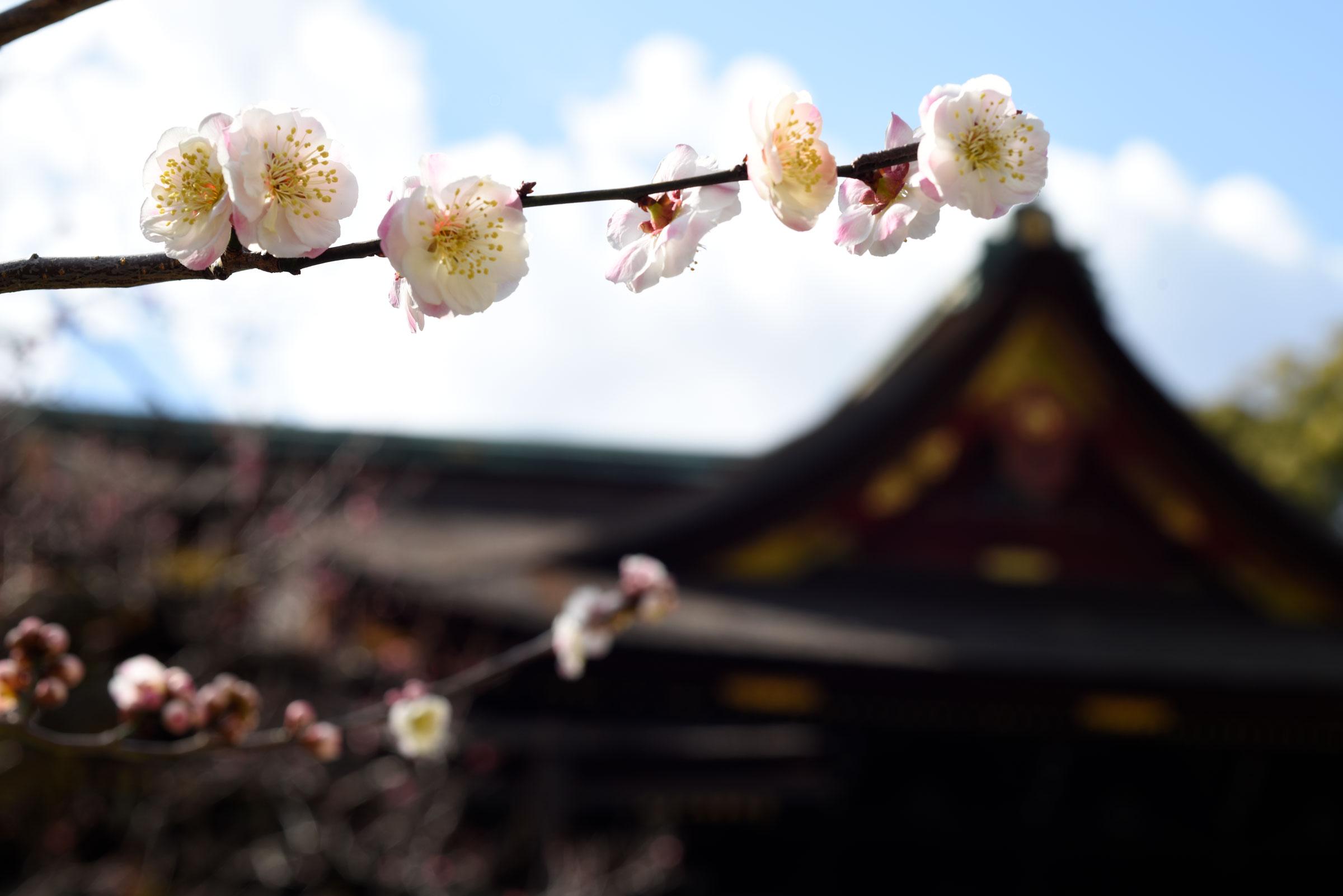朝の宇治市を撮影してきた【京都一人旅行 その一】
