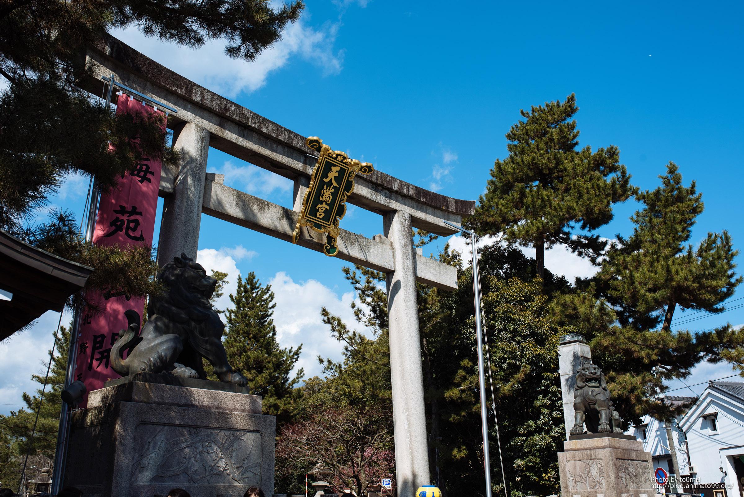 北野天満宮の梅の花がとても綺麗【京都一人旅その二】